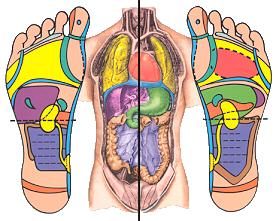 reflexologie-plantaire-corps-et-pieds