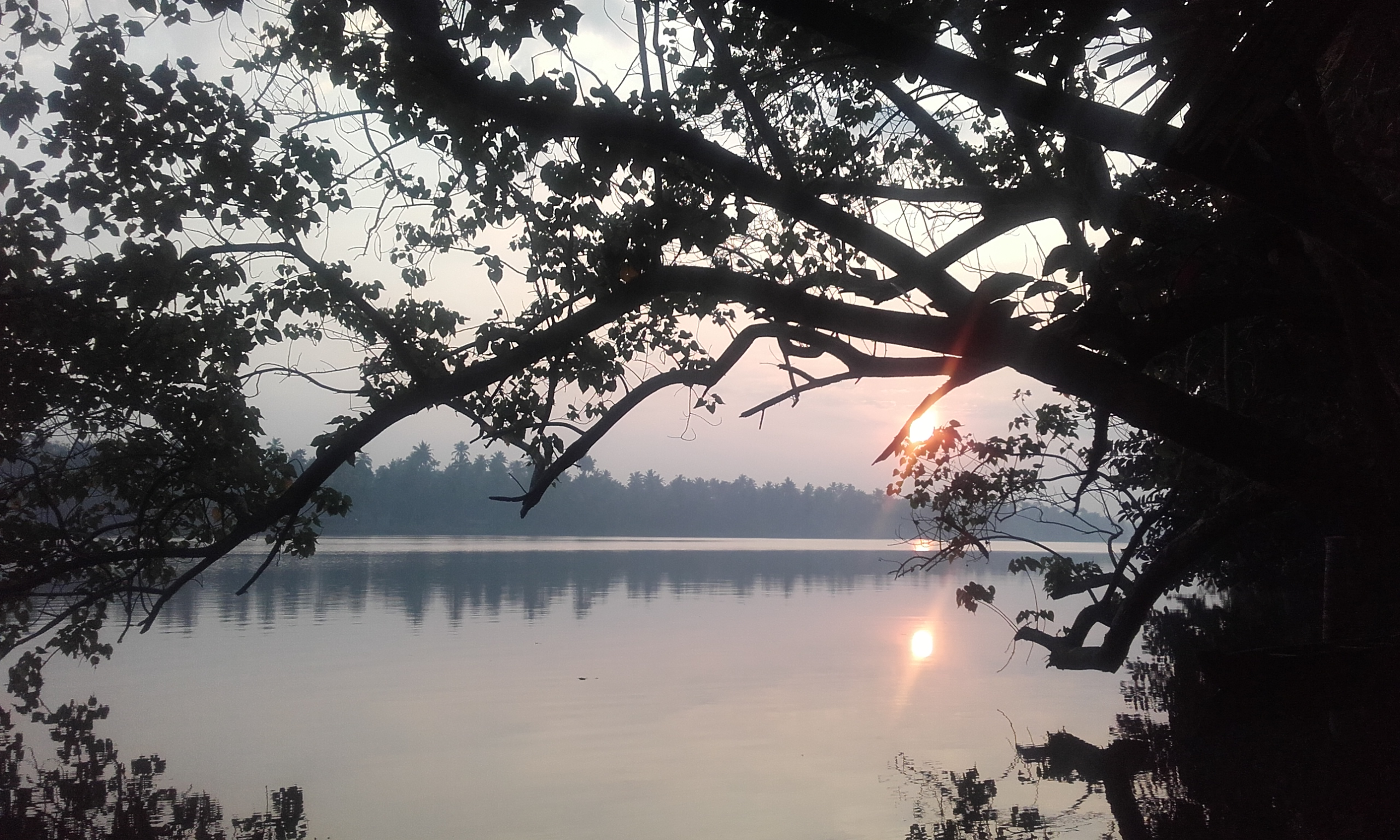 paysage-inde-kerala-stage-yoga